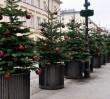 """Na ulicach Warszawy widać święta. """"208 jodeł i świerków już ustawionych"""""""