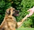 Będą wyższe kary za znęcanie się nad zwierzętami?