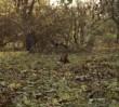 Kolejny film o pięknej warszawskiej jesieni [WIDEO]