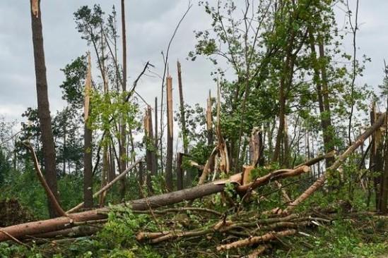 Zniszczenia w Suszku (PAP, Fot: Dominik Kulaszewicz)