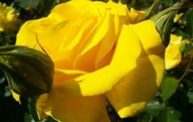 Promo na kwiatki dla twojej kobietki