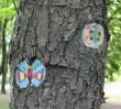Malowane drzewa (zdjęcia)