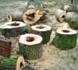 Wycinka drzew przy PKiN. Właściciel prywatny, działka zreprywatyzowana