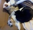 W domu Korwin-Piotrowskiej zaczadziły się 2 psy i 2 koty