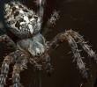 Za darmo: poznaj życie intymne pająków