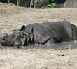 Zwierzaków z zoo sposoby na upały (ZDJĘCIA)