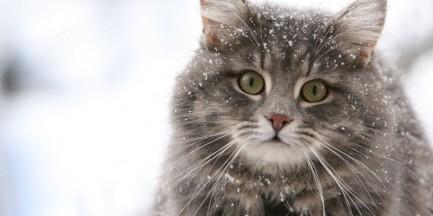 Bez naszej pomocy koty mogą nie przetrwać zimy
