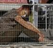 Do stolicy wrócą cyrki ze zwierzętami? Sąd unieważnił decyzję Hanny Gronkiewicz-Waltz