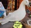 Za darmo: kiermasz prezentów nietrafionych na Grochowie
