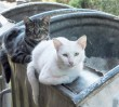 """Ratusz wyda ponad 1,5 mln zł na karmę dla kotów. """"Zapobiegają rozmnażaniu się gryzoni"""""""