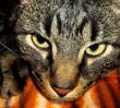 Groźna choroba kotów w stolicy!