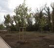 Drzewa, krzewy i trawniki przy nowych stacjach metra