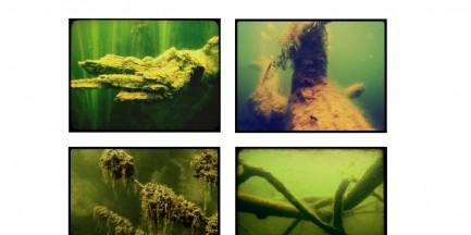 Za darmo: wystawa fotografii podwodnej