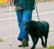 """Nie wpuścili do banku niepełnosprawnego z psem asystentem. """"Zostawia sierść i musimy potem sprzątać"""""""