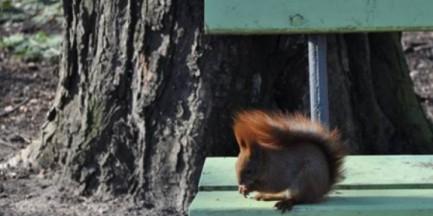 Warszawskie parki pełne zwiastunów nadchodzącej wiosny