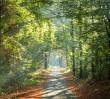 O lesie w lesie – centrum edukacyjne nie tylko dla dzieci