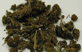 Palili marihuanę tuż przy strefie kibica!