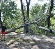 O krok od tragedii. Drzewo przewróciło się na Park Linowy przy ZOO
