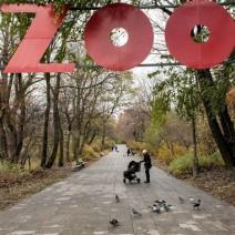 5-metrowy miś przed warszawskim zoo. Relacja na żywo