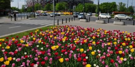 Warszawa cała w kwiatach [ZDJĘCIA]