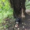 Pies był przypięty łańcuchem do drzewa (Fot. Straż Miejska)