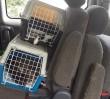 Wycieńczone psy i koty uwięzione w rozgrzanym aucie. W środku prawie 60 stopni