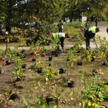 Tysiące nowych drzew i krzewów w Warszawie