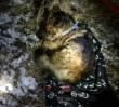 Pies zginął na torach. Drugi nie chciał go zostawić