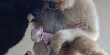 Warszawskie zoo ma nowego mieszkańca