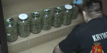 1,5 kg marihuany i 30 krzaków na Bielanach