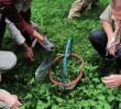 JADALNIA WARSZAWA czyli gdzie w stolicy rosną na dziko jadalne rośliny?